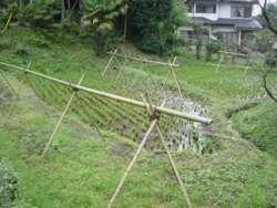 谷戸の間に残る収穫後の水田、横浜市緑区寺家町とともに多くの水田があった。(町田市三輪町)