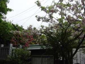 天気は悪かったものの至る所できれいな花が見られた