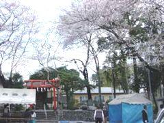 桜の花が舞い散る中で行われました