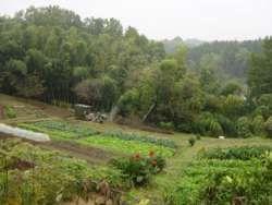 丘陵の間に広がる畑、鶴川駅からすぐとは思えない。(川崎市麻生区岡上)