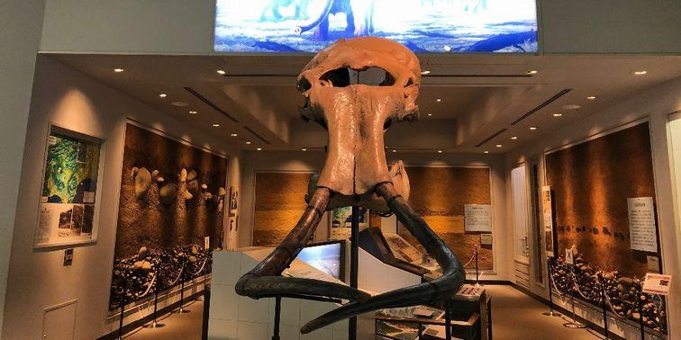 相模原市立博物館 常設展示室 マンモス