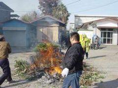 ムロを団子焼きの火に投じる