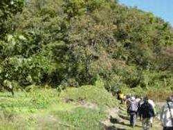 町田市側の多摩丘陵への入り口、たくさん実った柿が季節を伝える