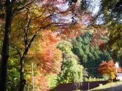 各地で紅葉が見頃で、美しい風景が見られた。(緑区佐野川和田)