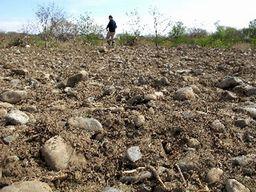今は裸地の河原も、秋にはカワラノギク群落へとうつりかわっているはず