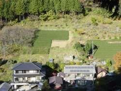 住宅を越え、山の上側にまで続く茶畑。(緑区佐野川和田)
