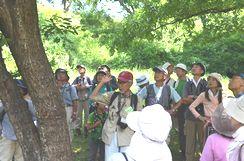 樹液の前でオオムラサキの説明