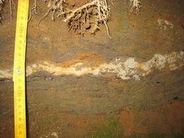 """""""未命名火山灰""""。鬼界葛原火山灰よりも目立つくらいの火山灰ですが詳しく調べられていません。"""
